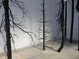 Art Exhibit With Burned Trees From Idaho Wildfire Challenges Human