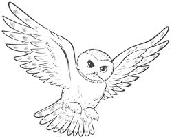 Owl Coloring Pages For Kids 65306 Longlifefamilystudyorg