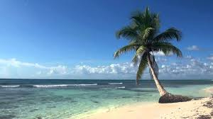 relaxing 3 hour video of tropical beach with blue sky white sand and palm tree