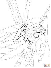 Small Picture Printable Frog Coloring Pages Kids Colouring Adult For Coqui Page