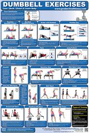 Bench Exercise Chart Full Body Dumbbell Workout Chart Full