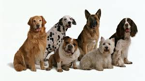 We've looked at the latest independent research and reviews of pet insurance for dogs to bring you the best uk dog insurance companies for 2021. Most Expensive Dog Breeds For Pet Insurance Forbes Advisor