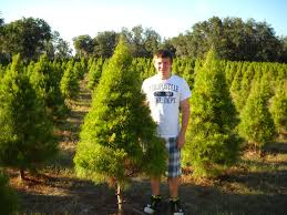 Florida Sand Pine, the Christmas Tree Choice of the Year | Fresh ...