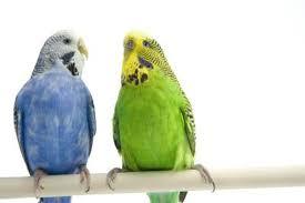 What Are The Friendliest Parrots Pets