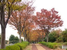 「尾根緑道 画像 無料」の画像検索結果