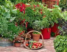 five easy vegetables to grow garden gate