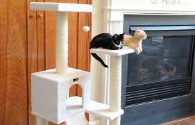 where to buy cat furniture. Beautiful Cat For Where To Buy Cat Furniture S