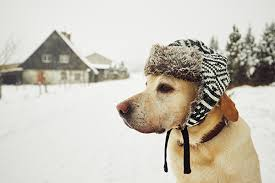 7 Ways to Keep Dogs Safe in Winter Temps