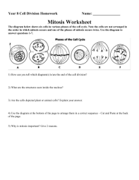ib biology cells essay test mitosis worksheet