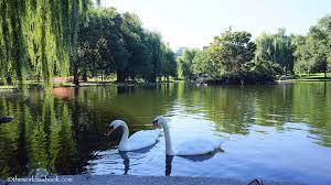 boston public garden swan