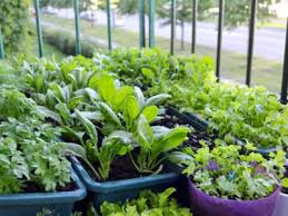 small space gardening growing crops