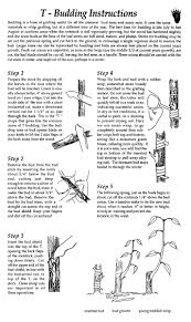 How To Graft Fruit Trees To Produce Your Own Cheaply How To Graft Fruit Trees With Pictures