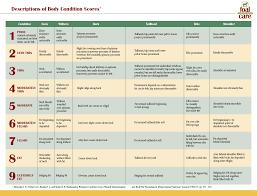 Foalcare Com Foal Body Condition Scoring