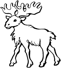 Small Picture Advanced Moose Coloring Pages Coloring Coloring Pages
