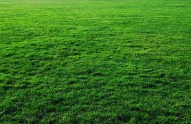grass texture hd. Seven Free Grass Textures Or Lawn Background Images | Www . Texture Hd
