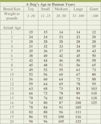 Medium Dog Age Chart Dog Age Chart By Size Veterinary Nutrition Essentials