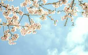 Tree Branch Wallpapers - Top Free Tree ...