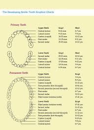 Pin On Dental