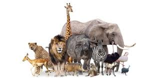 E1 Science Animals And Their Babies Proprofs Quiz