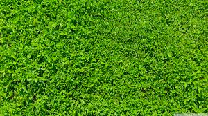 hd 169 grass background hd86 background