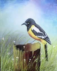 fine art acrylic painting an arizona native bird a scott s oriole he is