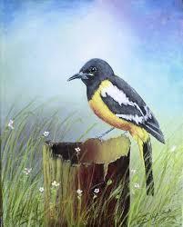 fine art acrylic painting an arizona native bird a scott s oriole he is