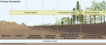 Primary Succession And Secondary Succession Venn Diagram Ecological Succession Definition Facts Britannica