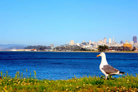 Crissy Fields View. San Francisco | Sacred places, Crissy field, Francisco