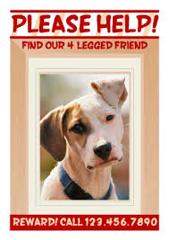 how to make lost dog flyers free flyer templates pageprodigy