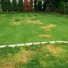 photo of trugreen lawn care randolph nj united states they grass was