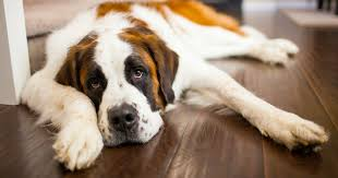 10 Of The <b>Strongest Dog</b> Breeds In The World - Care.com