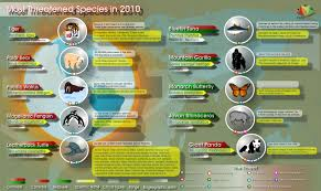 essay on extinction of species essay contest why should we save  essay on the ldquo threatened species rdquo in