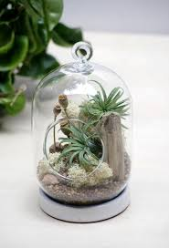 Poppy Seed Tabletop/Hanging Air Plant Terrarium - is a modern shaped  terrarium, with live green air plant ( known as Tillandsia ) and preserved