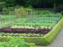 growing your own vegetable garden preen