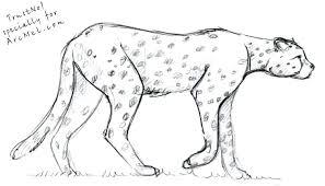 Cheetah Kleurplaat Van Baby Cheetah Kleurplaat Dwacme