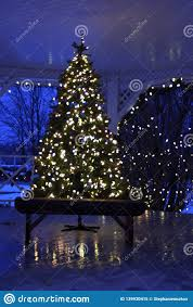 Outside Trees With Lights White Christmas Tree Outside Stock Image Image Of Evening