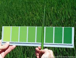 Fall Leaf Color Chart Updated Leaf Color Chart Is In The Mail California Rice News