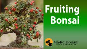 Forum What Are Your 3 Favourite Fruit Trees In Order And WhyFruiting Trees