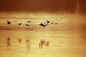 Bangladesh Elva Bird Brun - Gratis foto på Pixabay