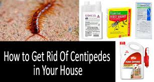 how to get rid of centipedes in your house photo