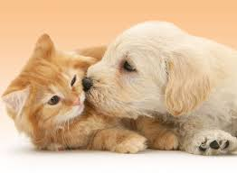 cute puppies and kittens kissing. Fine Puppies Here Are 20 Precious Puppy Kisses That Will Make Your Day On Cute Puppies And Kittens Kissing T