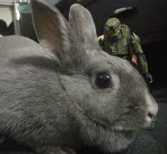 Happy Easter Xbox Happy Easter Happyeaster Easter Bunny