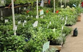 denver garden centers. Herbs And Vegetable Plants In Denver, Denver Garden Centers