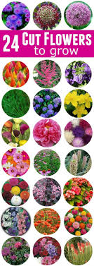flowers for the heartland spring summer fall these 24 cut flowers to grow will look gorgeous in your garden and give you bountiful bouquets of fresh