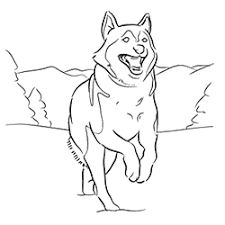 Small Picture Siberian Husky Coloring Page Coloring pages for Adults