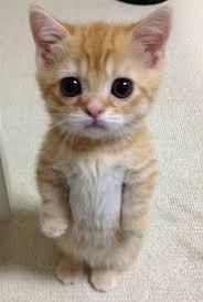 Résultat de recherche d'images pour 'chat trop mignon'