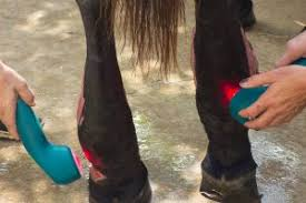 The Best Hoof Supplements For Barefoot Horses 2019 Reviews