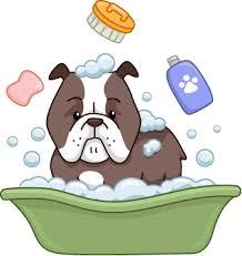 bulldog bathing