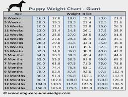 Giant Breed Puppy Growth Chart Puppy Weight Chart This Is How Big Your Dog Will Be