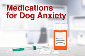Canine Benadryl Dosage Chart Can I Give My Dog Benadryl And If So How Much